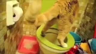 Кот ходит в туалет по человечески