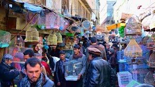 Afghans celebrate New Year Nowruz Free HD Video