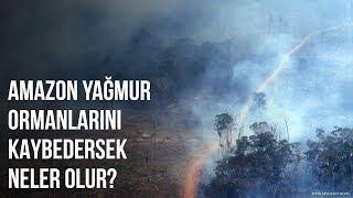 Amazon Yağmur Ormanlarını Kaybedersek Hayatta Kalabilir Miyiz?
