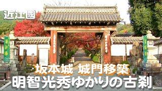 琵琶湖湖畔で坂本城址より少し北で山麓よりの光秀ゆかりの古寺の 紅葉が...