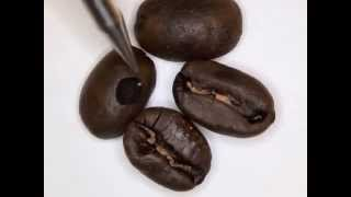 видео Где купить свежеобжаренный кофе в зернах