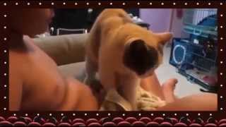 Download Video Pijat Plus Plus | Funny Cat Special Massage MP3 3GP MP4