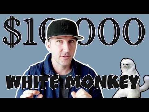 My $10,000 White Monkey Job in Beijing, China