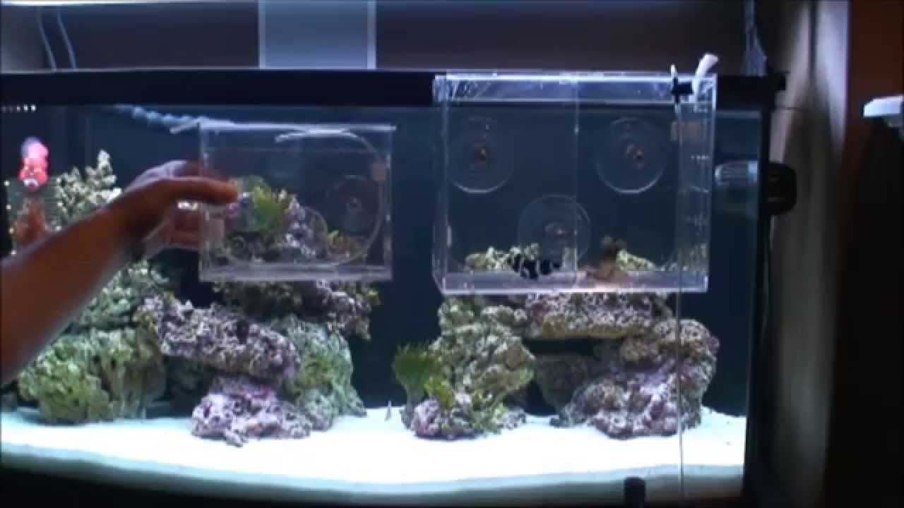 Freshwater fish acclimation - Reef Gently Acclimate Xl Review And Comparison