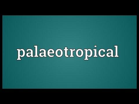 Header of palaeotropical