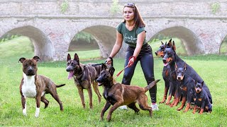 These 10 Dog Breeds Will Keep You Fit