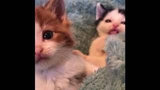 Приколы про животных  Смешное видео про котов, собак и не только  Такого Вы еще не видели! Выпуск 10