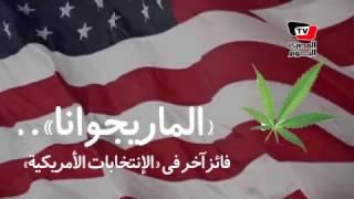 «الماريجوانا»..فائز آخر في «الإنتخابات الأمريكية»