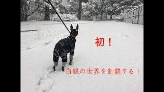 こんにちは。 駒沢のカフェの看板犬9(きゅう)のチャンネルへようこそ...