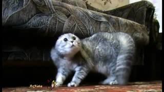 Говорящие коты на русском))) подборка