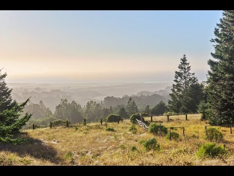 California Coastal Property | Crispin Redwood Property