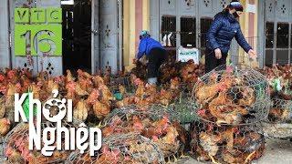 Mặc giá gà giảm, nông hộ vẫn lãi 55 triệu/4 tháng nuôi | Khởi nghiệp 566 |  VTC16