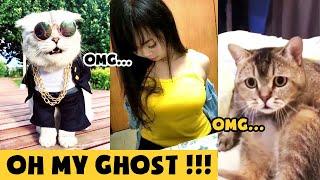 【Tik Tok Chó Mèo】Không nhịn nổi😂😂 Những chú Chó Mèo hài hước nhất thế giới #3