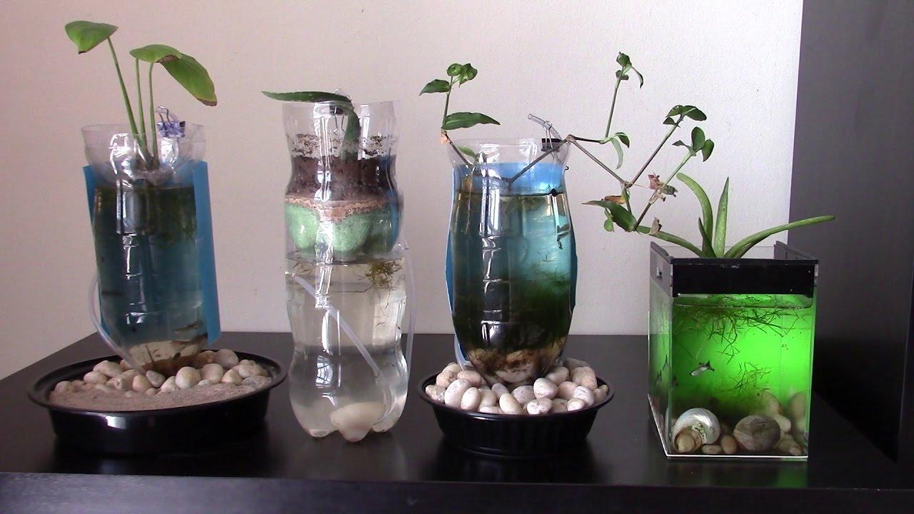 Caring For Fish In Aquarium Of Plastic Bottle Youtube