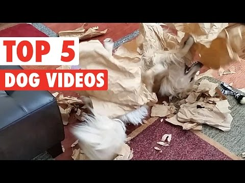 Cute Puppy Pet Compilation 2016