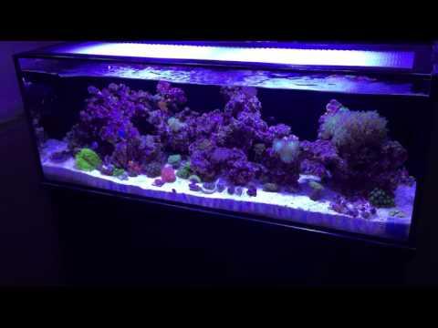 innovative marine fusion 30L 4 months 1 week update