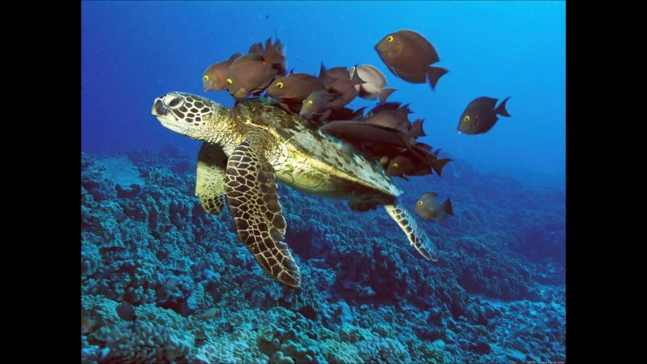 Connu Diaporama sur les animaux #2 les animaux sous marins # - YouTube IZ19