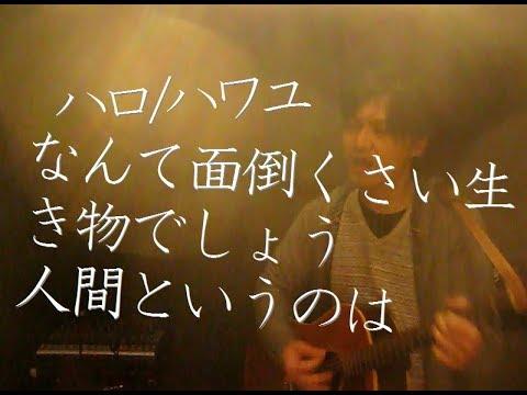 ハロ/ハワユ ナノウ(ほえほえP) Cover By GAIN