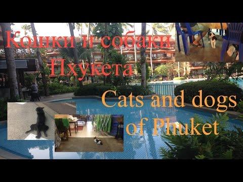 Кошки и собаки Пхукета. Cats and dogs of Phuket. - Duration: 2:19.