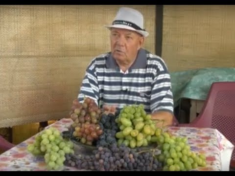 Талантливый виноградарь Анатолий Безяев - YouTube