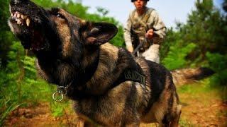 Боевые собаки войны