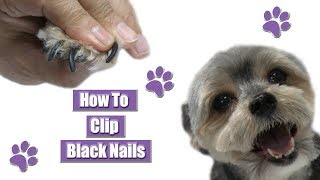 How To Clip Black Nails