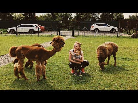 На выход! ЭкоФерма. Альпаки гонятся за детьми!