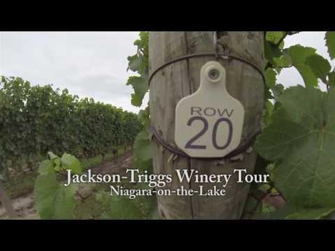 Niagara Falls - Jackson-Triggs Wine Tour