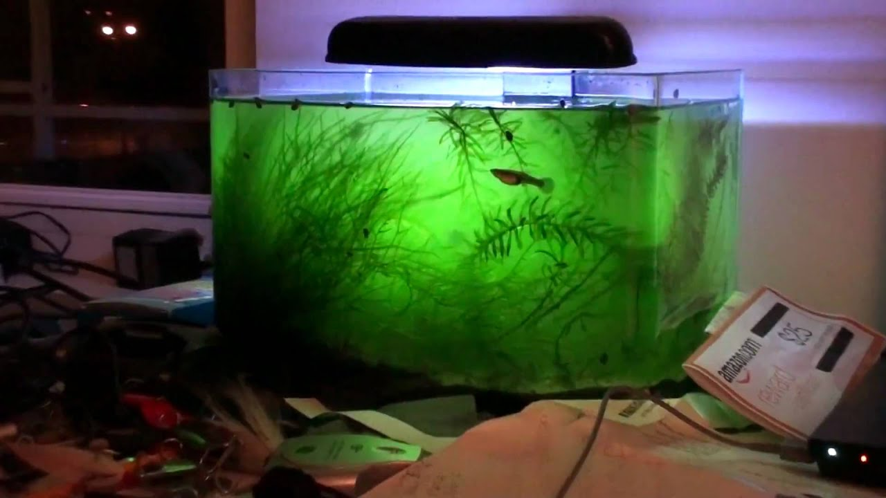 Fish for unfiltered tank -