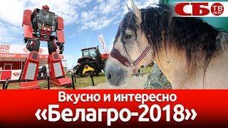 "Выставка ""Белагро-2018"" – вкусно и интересно"