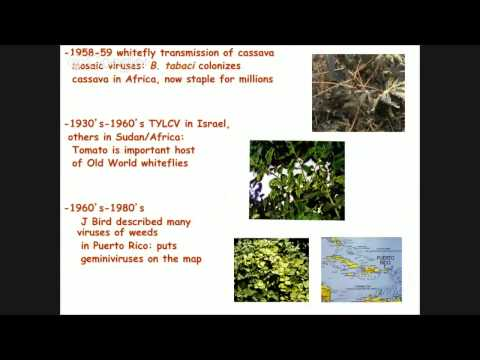Biotypes and phylogenetic biology of the Bemisia tabaci - VideoWeb EEA