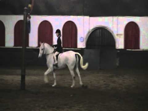 White Pony Dancing, Strictly Come Showing: Waterside Welsh Luanna and Sylvia Dixon