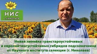 Новинки семян подсолнечника под гранстар и евролайтинг от НИС (г.Николаев)