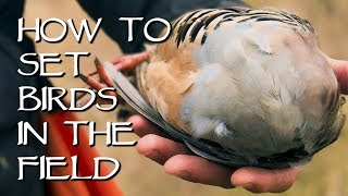 How To Set Birds In The Field - Bird Dog Training