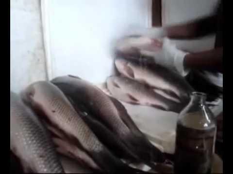 Fish kana hane kark hoskta es tara ke