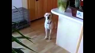 Такие смешные собаки, бесплатные приколы про животных