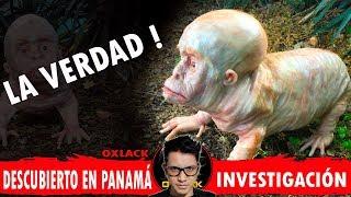 #PANAMA EN PÁNICO POR ESTA CRIATURA DESCUBIERTA LA VERDAD! @OxlackCastro