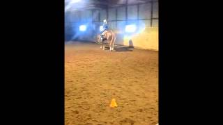 BIG BROWN BREWSKI AQHA and APHA show horse