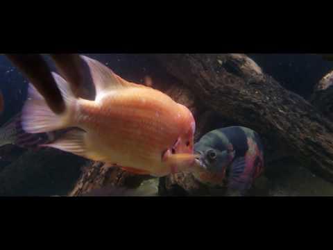 Aquarium Fish Experiment...Gone Wrong