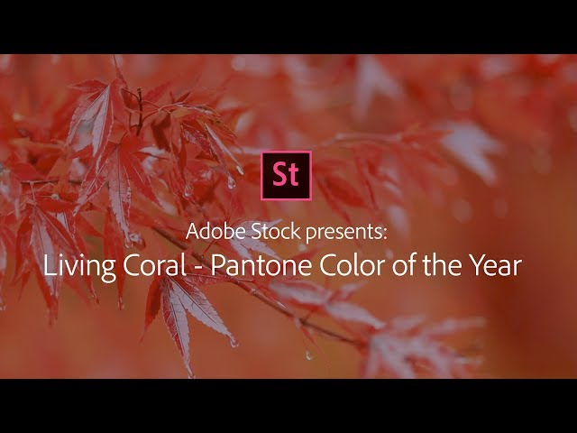 Living Coral - Stock Footage from Adobe Stock | Adobe Creative Cloud