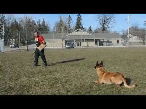 Ipo In Dog Training Youtube