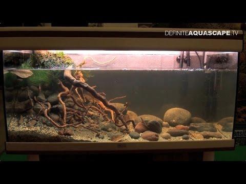 Biotope Aquarium Design Contest 2014 - The 3rd Place, North America