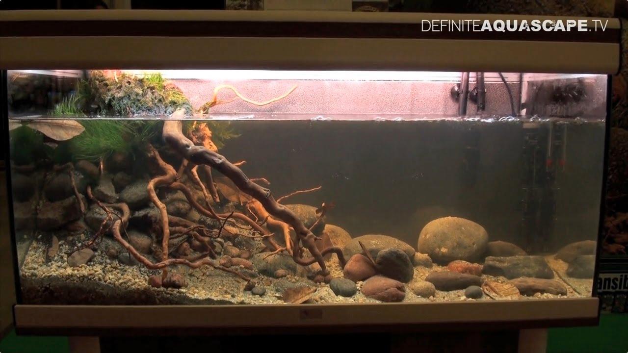 Biotope Aquarium Design Contest 2014 The 3rd Place North America Youtube