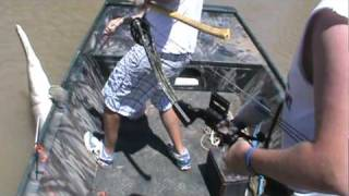 team tejas bowfishing 6 10 gator gar