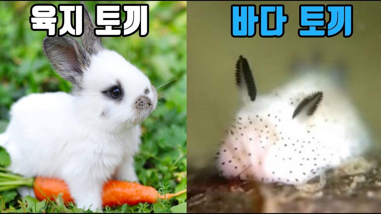바다 속에서만 사는 토끼
