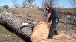How To Cut An Oak Tree With A 36 Inch Stihl Chain Saw