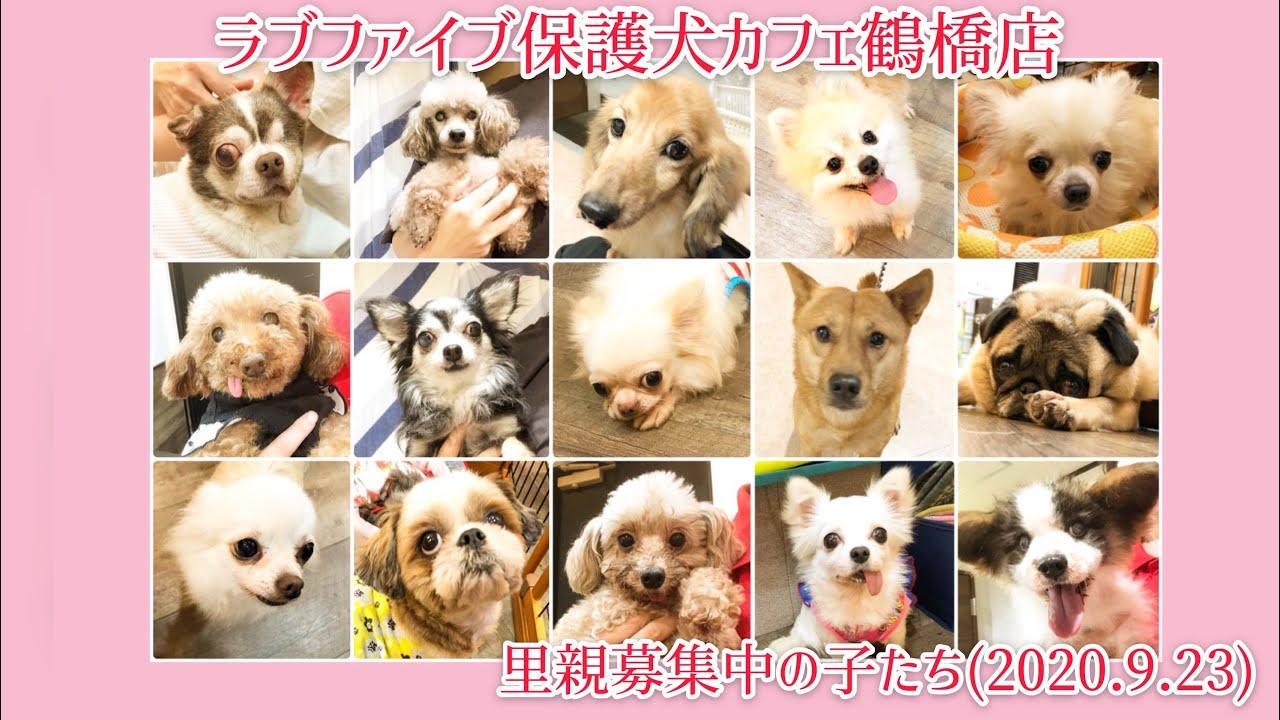 鶴橋 店 犬 カフェ 保護