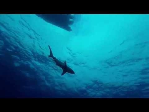 Africa - Shark Diving on the Awoli Showel