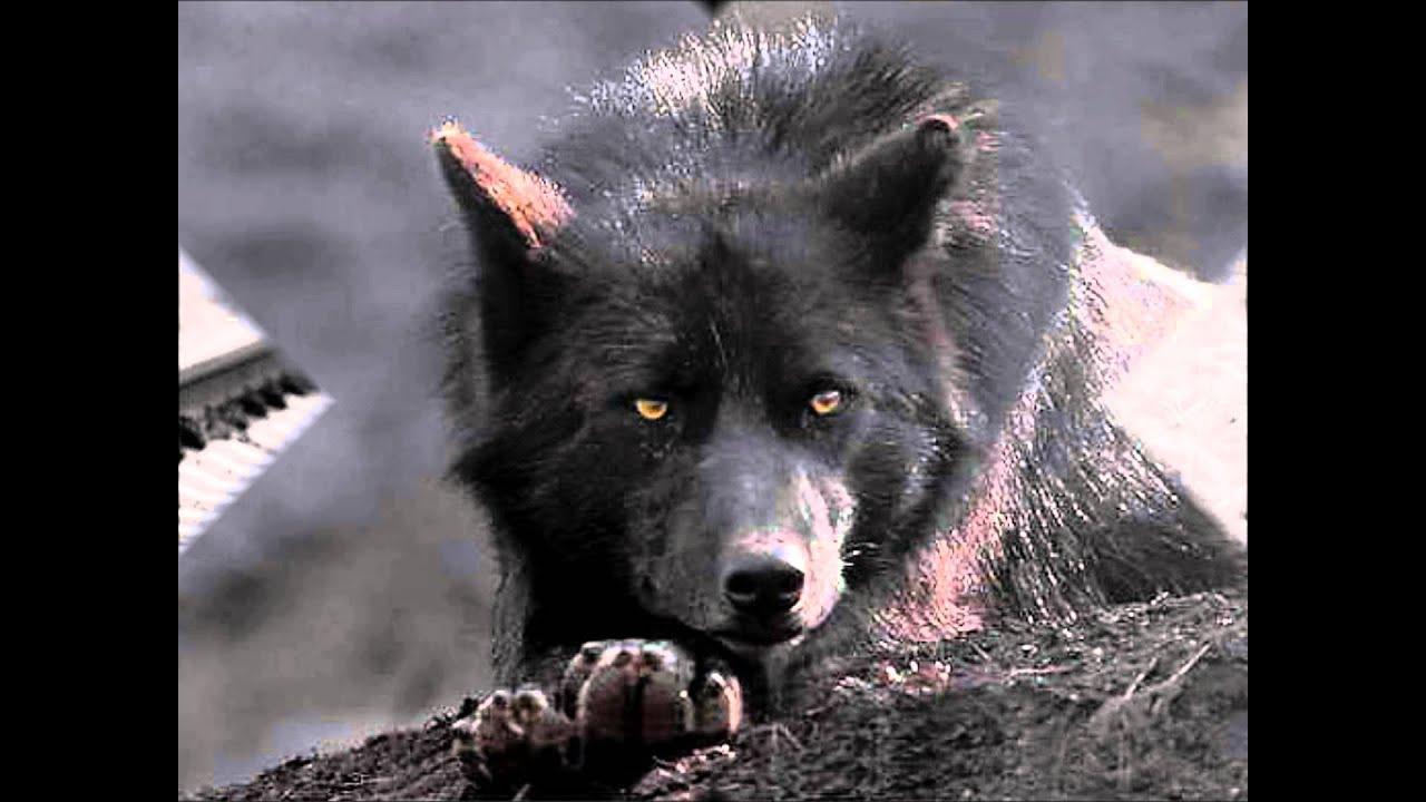 Wolfsmond