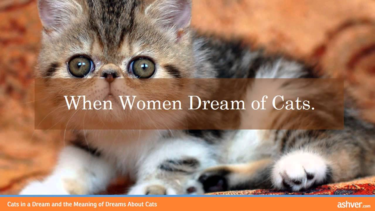 Why dream of a cat with kittens: different interpretations of sleep 55